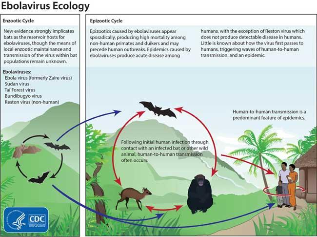 ebola-ecology-spirit-india